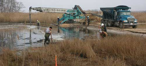 Creating a Wetland Buffer